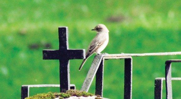 7 высказываний о смерти